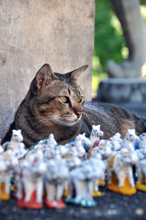 Kot w tajlandzkiej świątyni zdjęcia stock