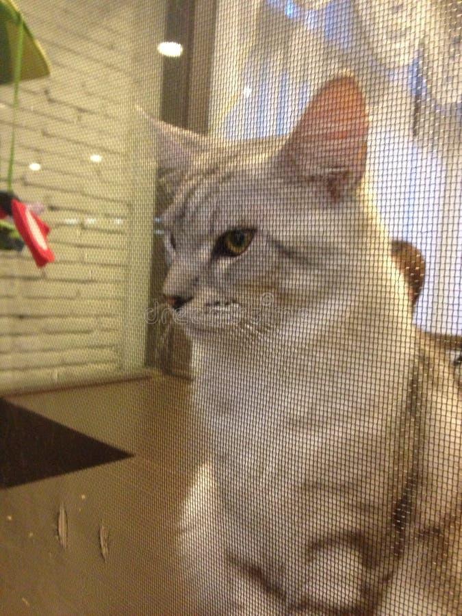 Kot w Thailand obrazy royalty free