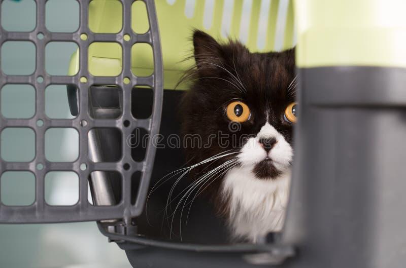 Kot w transporterze obraz stock