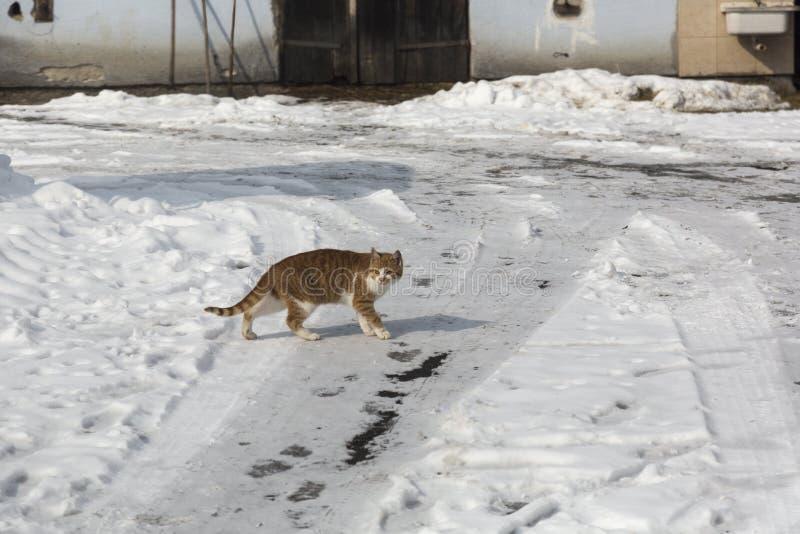 Kot w zima czasie zdjęcia stock
