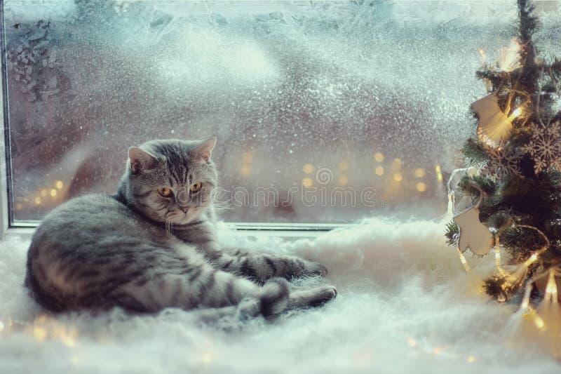 Kot w zimy okno obraz royalty free