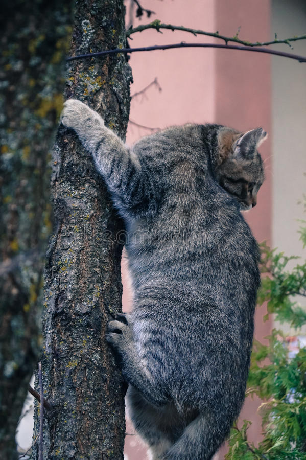 kot wspinał się drzewa w strachu obrazy royalty free