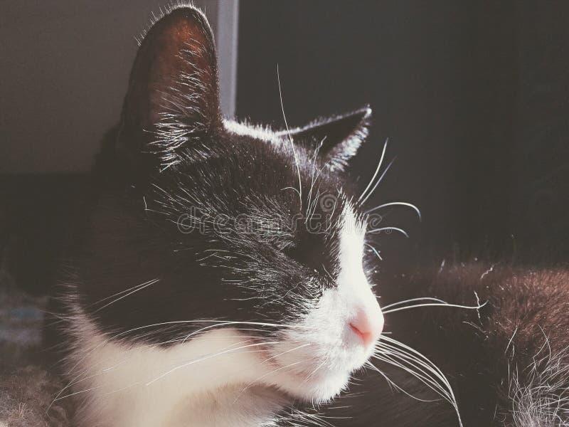 Kot wygrzewa się w świetle słonecznym zdjęcie royalty free