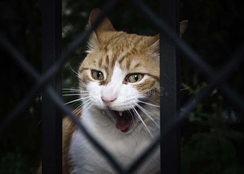 Kot złość obraz stock