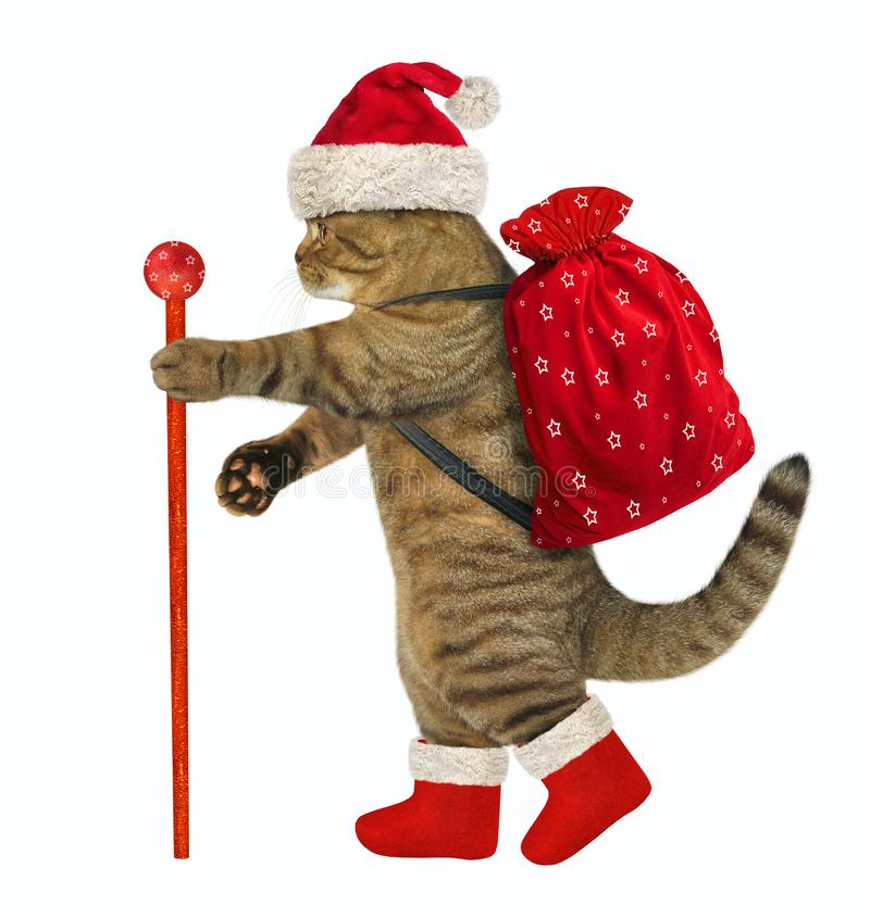 Kot z Bożenarodzeniowymi prezentami zdjęcia royalty free