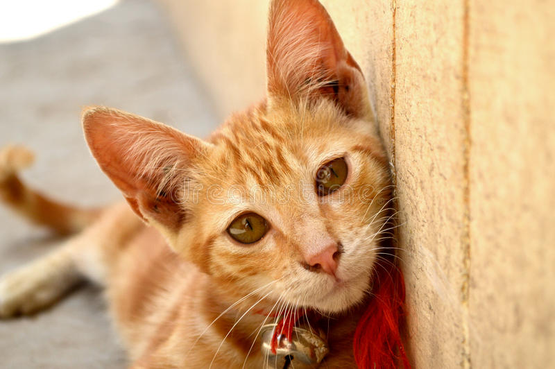 Kot z dzwonem obrazy stock