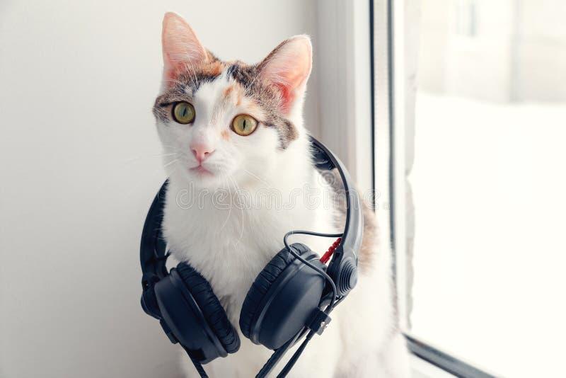 Kot z hełmofonami na windowsill obrazy royalty free