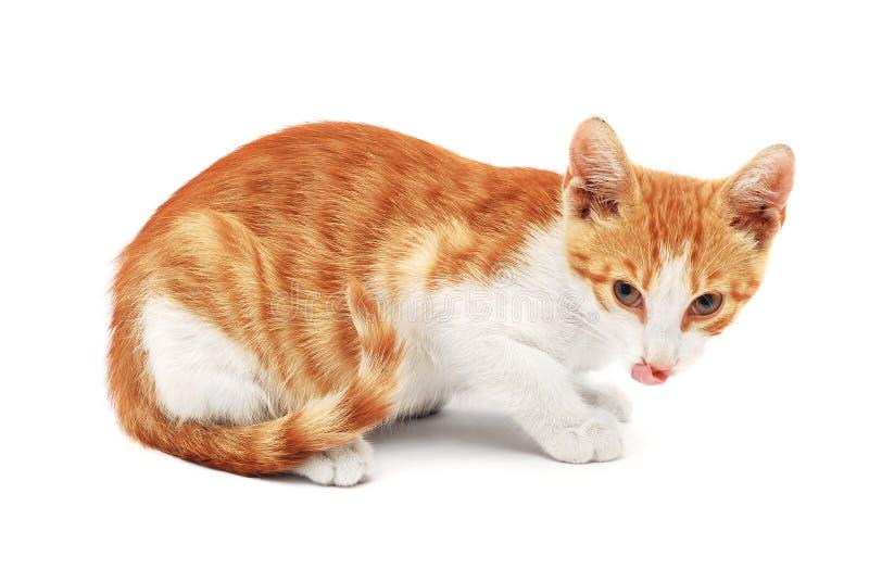 Kot z jęzorem jęzor fotografia stock