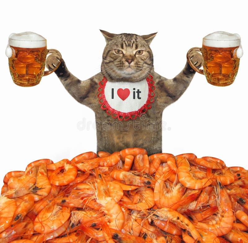Kot z kilka piwami zdjęcia royalty free