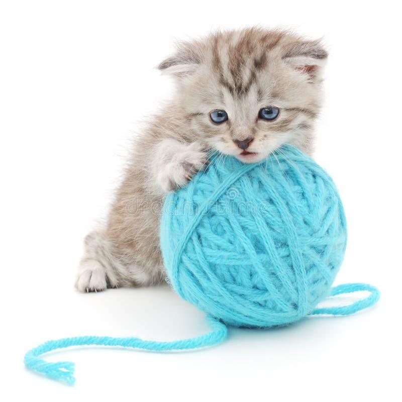 Kot z piłką przędza obrazy stock