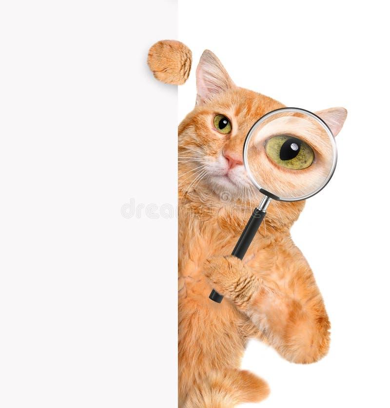 Kot z powiększać i szukać - szkło obrazy stock