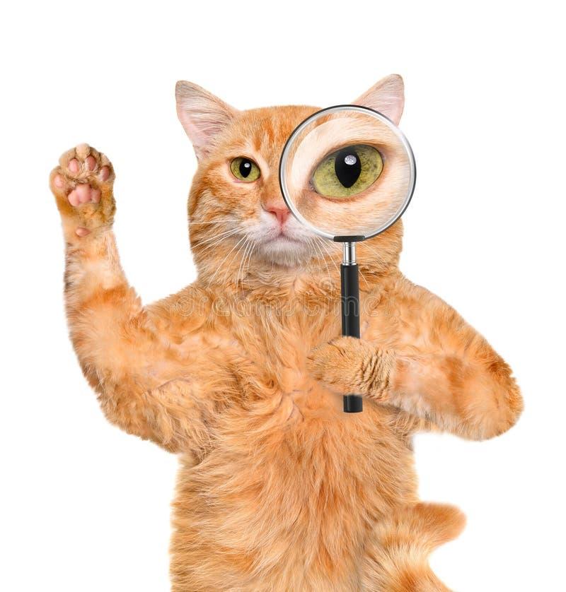 Kot z powiększać i szukać - szkło obraz stock