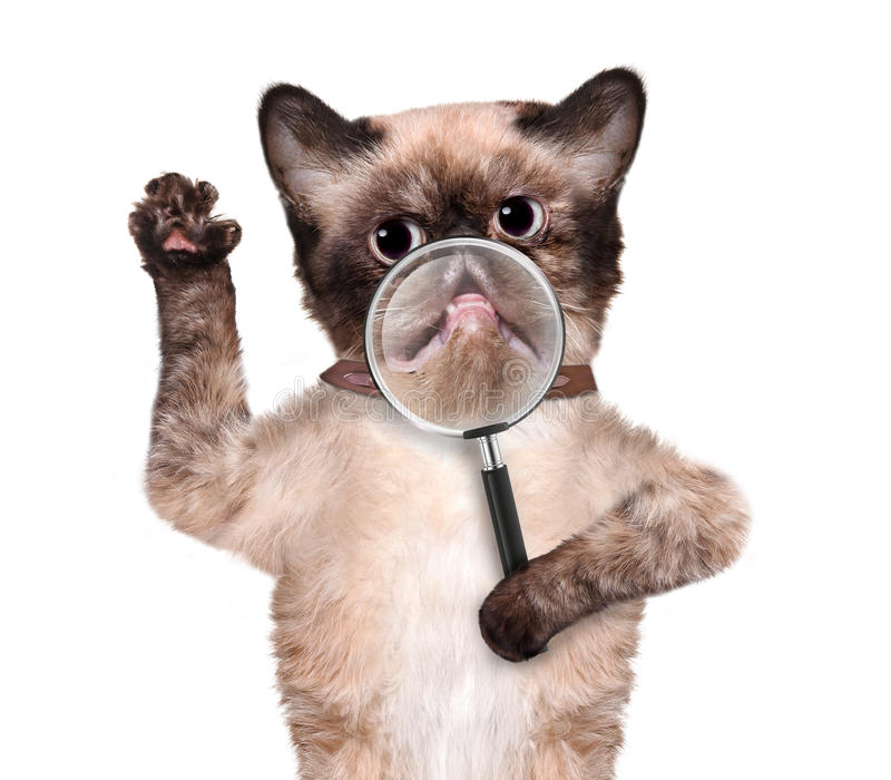 Kot z powiększać - szkło uśmiech obraz stock