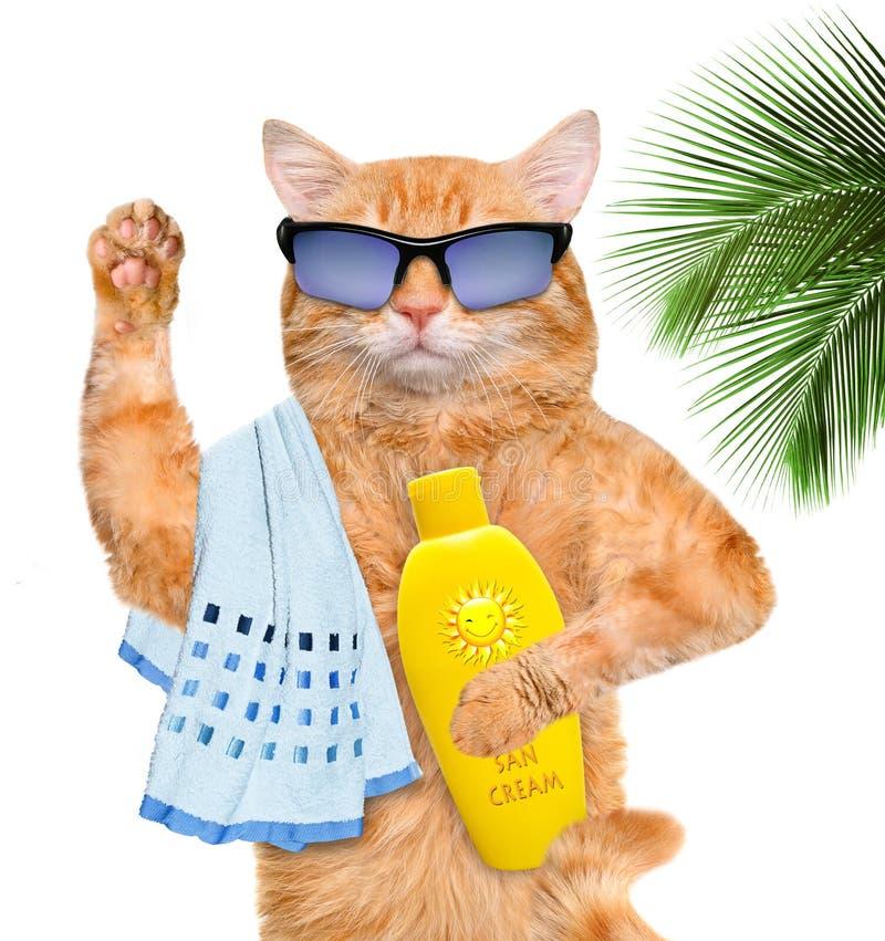 Kot z sunblock obrazy stock