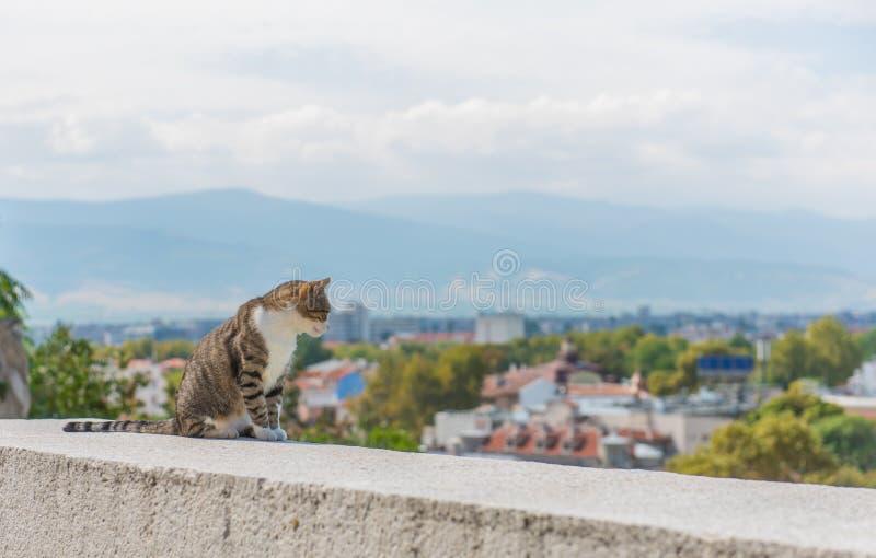 Kot z widokiem zdjęcia royalty free
