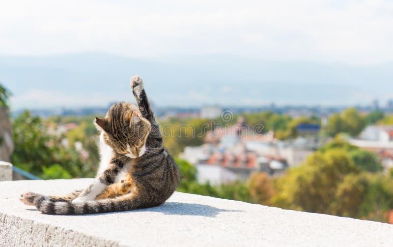 Kot z widokiem fotografia stock