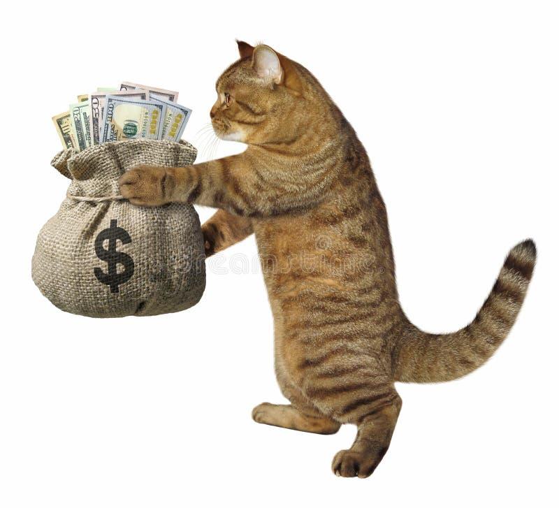 Kot z workiem pieniądze zdjęcia royalty free