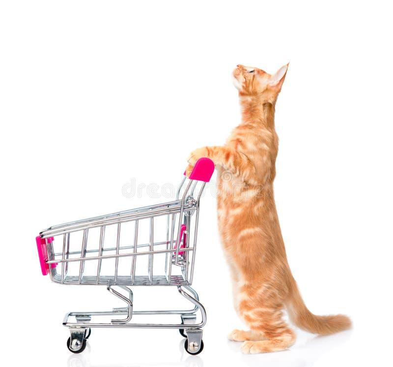 Kot z zakupy tramwaju przyglądający up pojedynczy białe tło zdjęcie stock