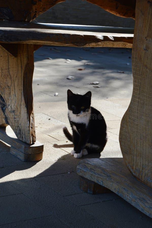 Kot z zdradzonym okiem fotografia stock