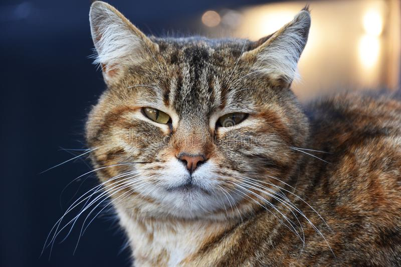 Kot z zielonymi oczami zdjęcia stock