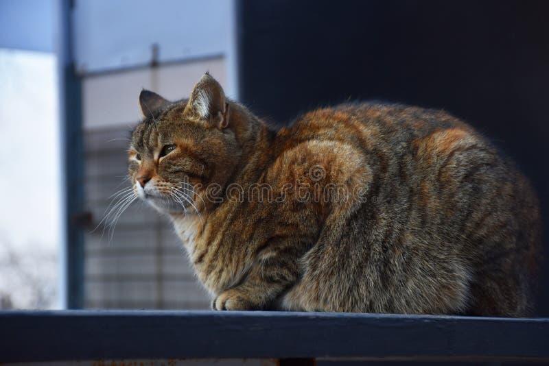 Kot z zielonymi oczami zdjęcie royalty free