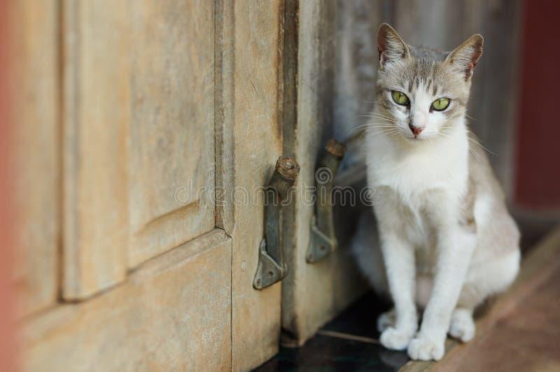 Kot z zielonymi oczami siedzi obok drzwi fotografia stock