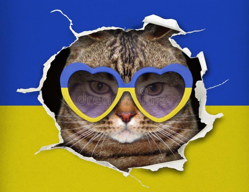 Kot za ukraińską flagą fotografia stock