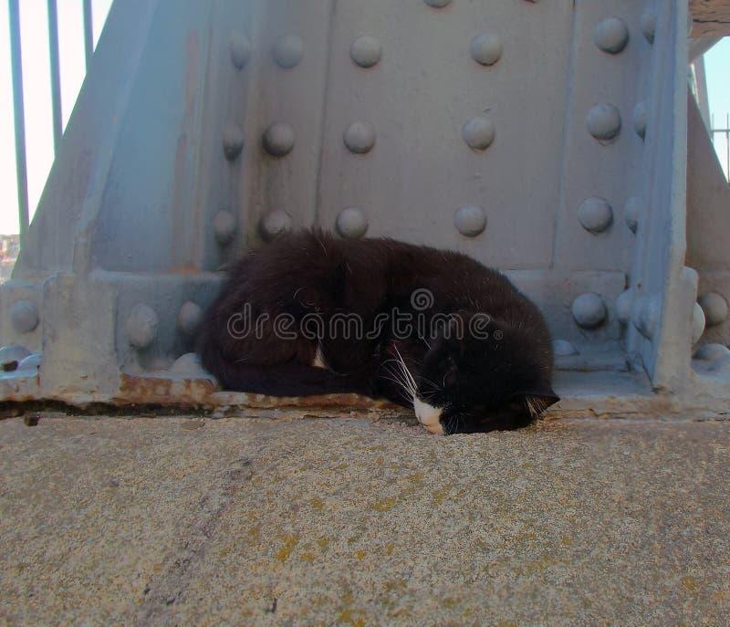 kot zdjęcia bezdomni na ulicy obrazy stock