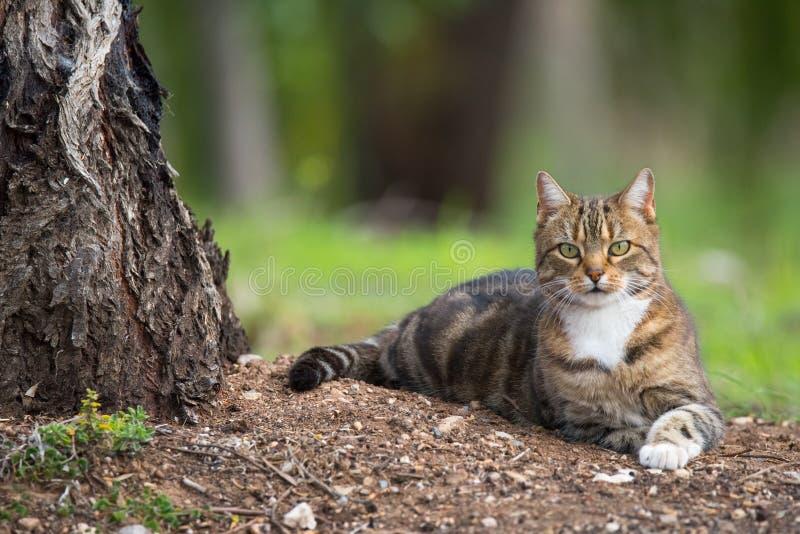 kot zewnętrznego zdjęcia stock