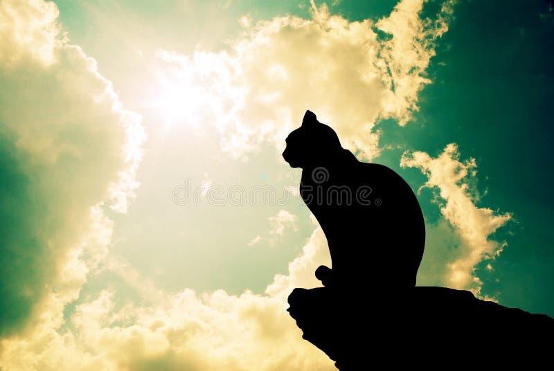 kot zgłębia niebo fotografia stock