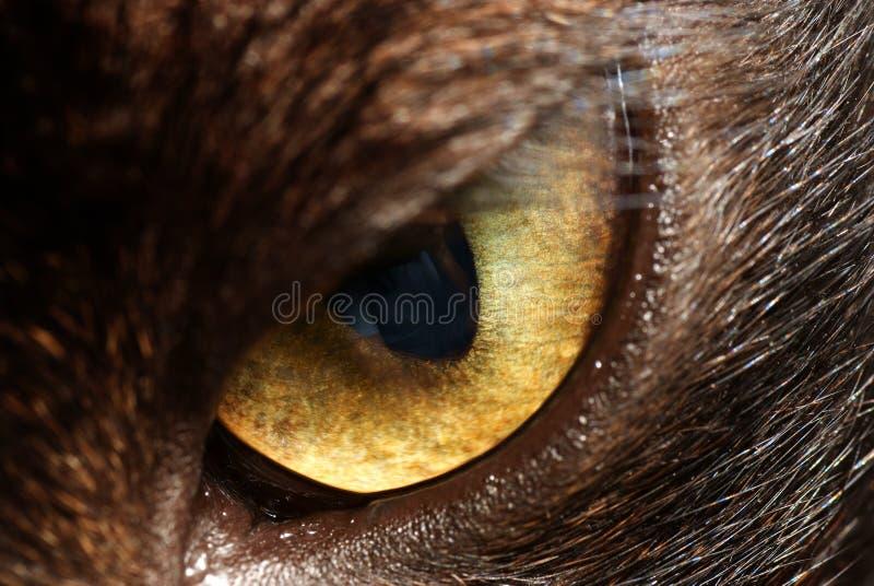 kot zgłębia oko obrazy stock