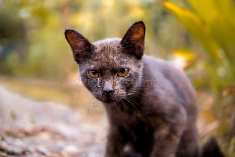 Kot ?zy Jego stawia czoło exspression omawianą ocenę wciąż, czy on smutny, gniewny, lub inaczej zdjęcia stock