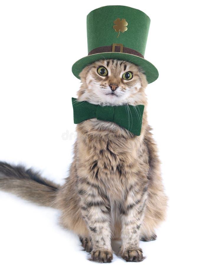 kota śliczny dzień Patrick s st obraz stock
