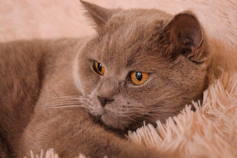kota świat zdjęcie royalty free