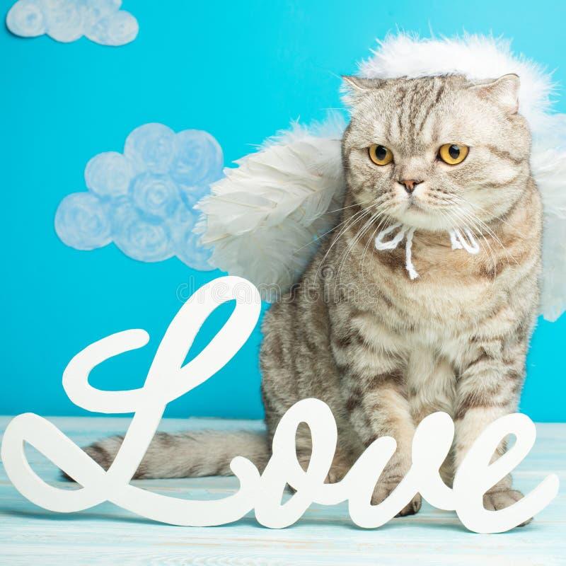 Kota amorek, śliczny anioła pojęcie walentynka dzień z wpisową miłością, obraz stock