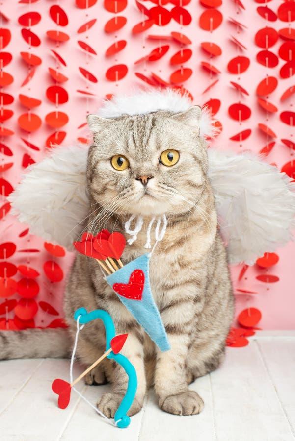 Kota amorek, anioł, z łękami i strzałami na różowym tle zdjęcie stock