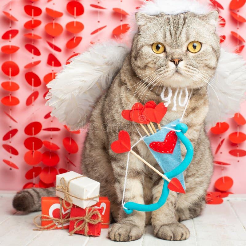 Kota amorek, anioł, z łękami i strzałami na różowym tle zdjęcia royalty free