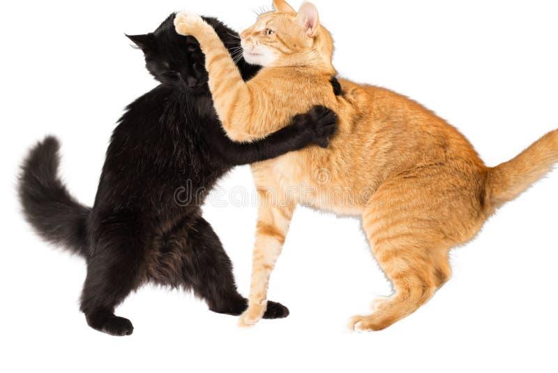 kota bój obraz stock