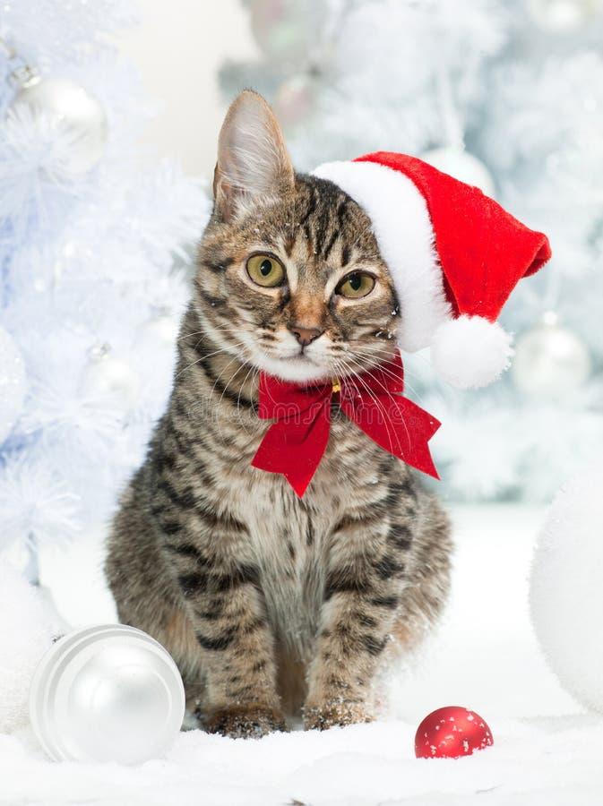 kota bożych narodzeń ilustracyjna kiciuni śniegu płatka śniegu zima zdjęcia stock