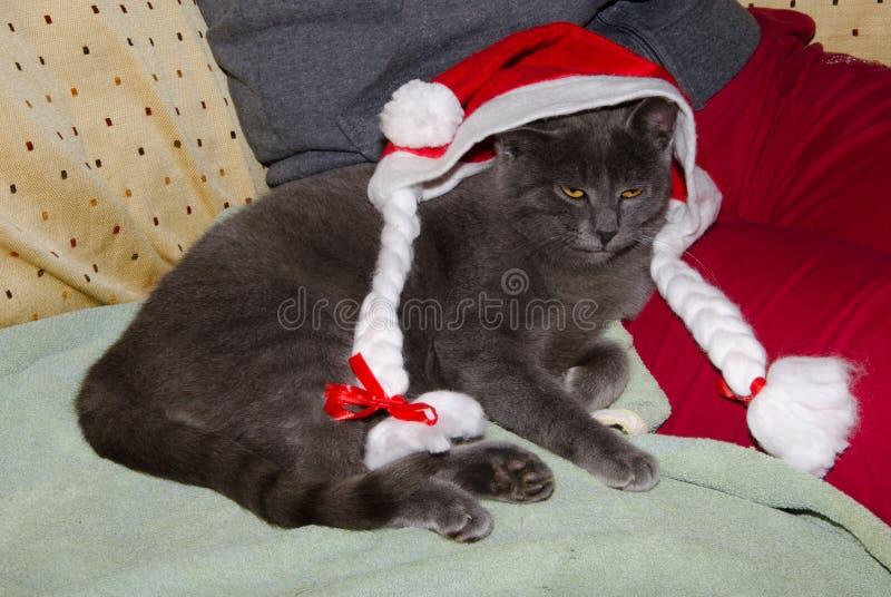 kota ciekawy śliczny kapeluszowy Santa target2190_0_ zdjęcie royalty free