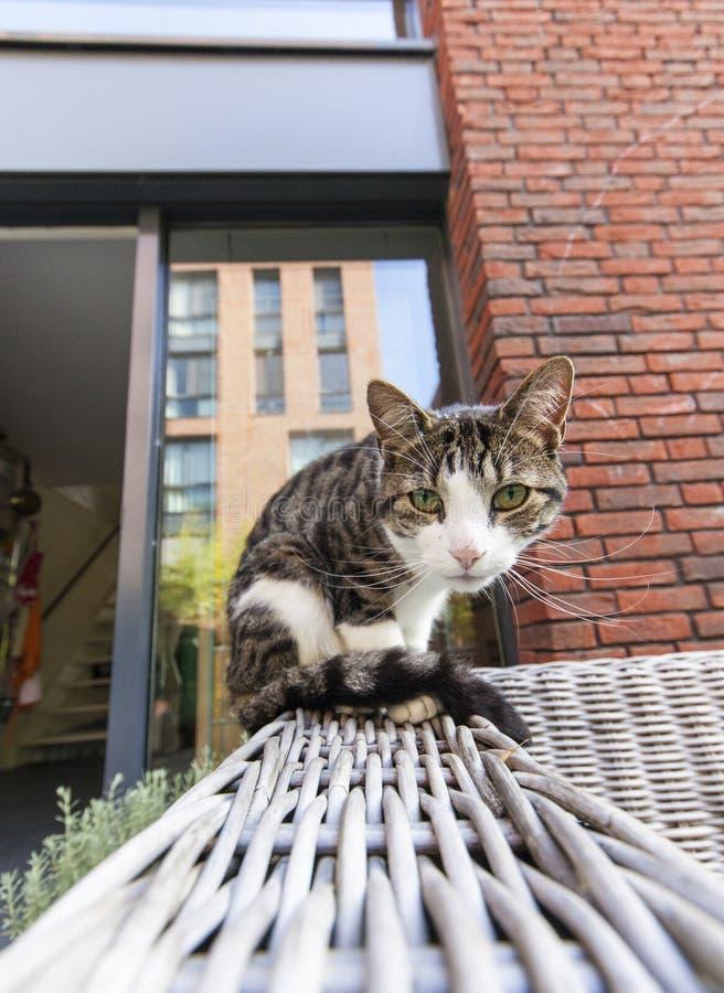 kota dopatrywanie ty obrazy stock
