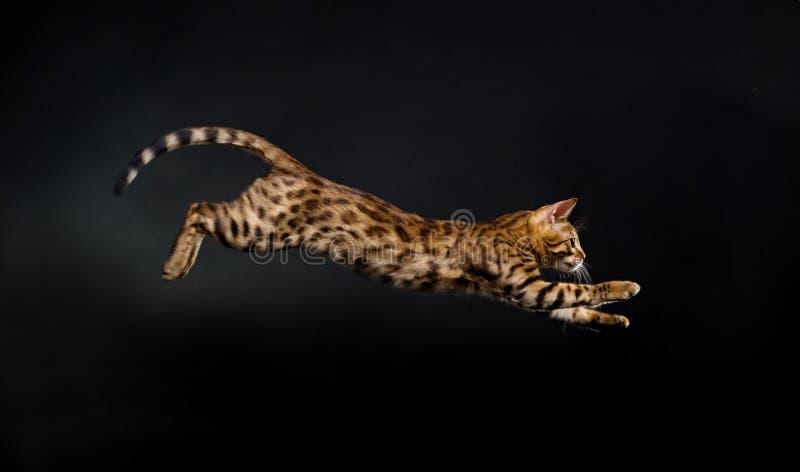 kota doskakiwanie