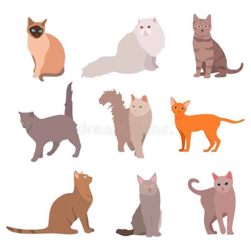 Kota duży set Piękni kreskówka koty odizolowywający na bielu wektor ilustracji