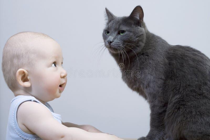 kota dziecko obraz royalty free
