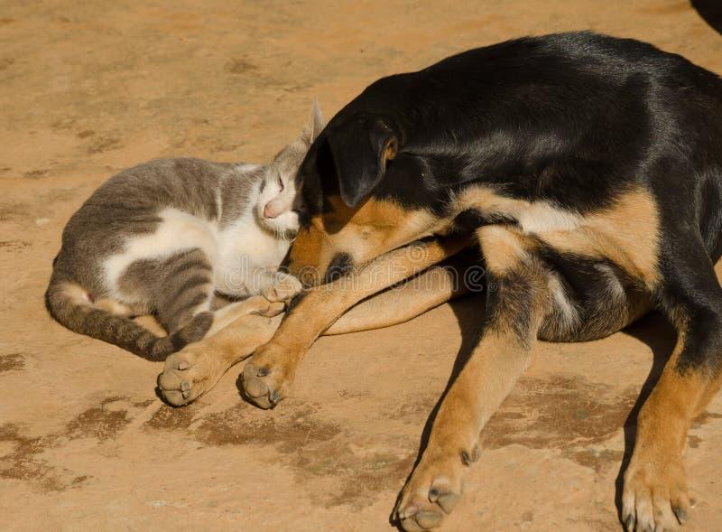 Kota i psa dosypianie na podłoga fotografia stock