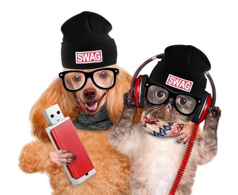 Kota i psa hełmofony zdjęcia stock