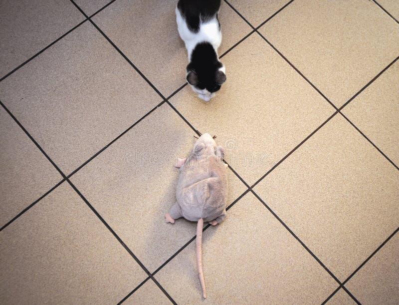 Kota i zabawki mysz obraz stock
