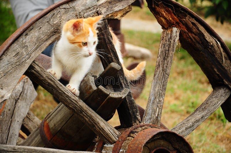 kota koło zdjęcia royalty free