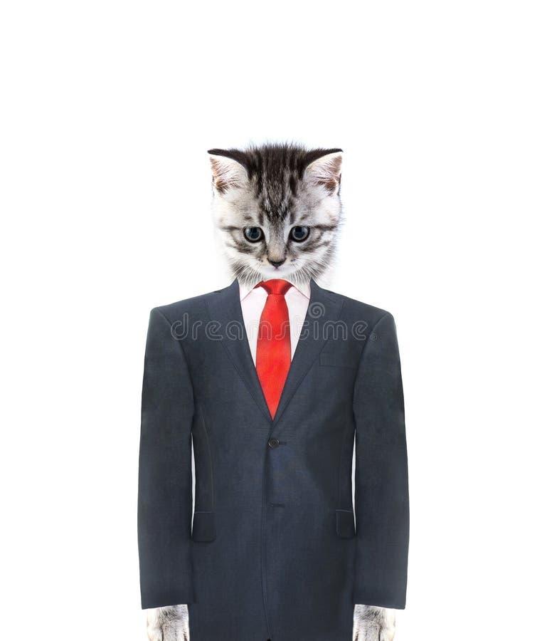 kota kostium fotografia stock