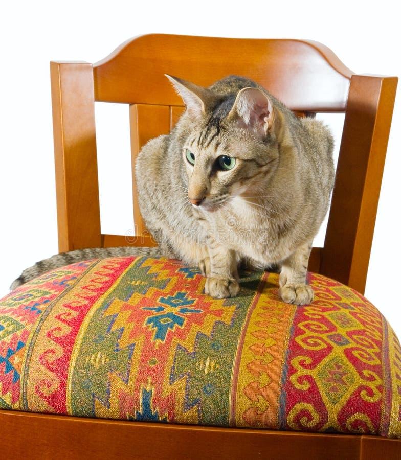 kota krzesła Oriental obsiadanie fotografia royalty free